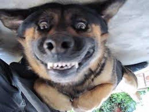 chienpolicier