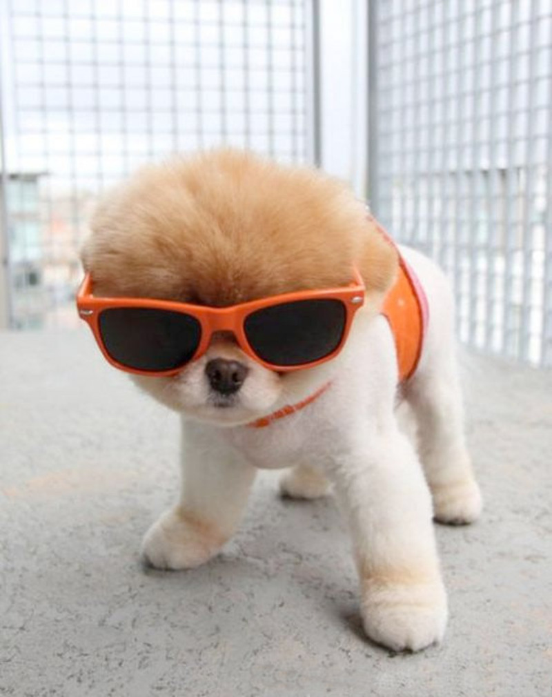 discodog