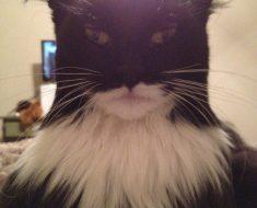 Batman ou pas…