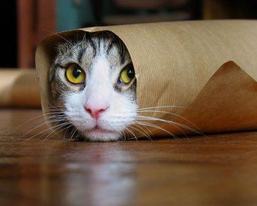 Je suis caché !