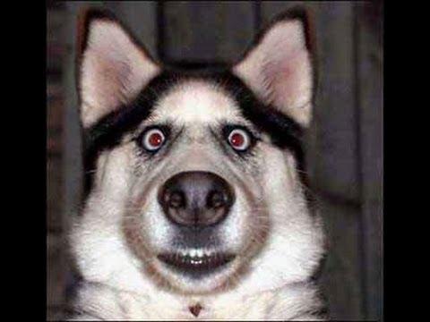selfie-chien