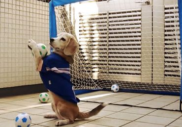 chien-football