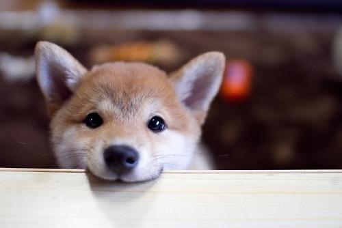 photo-chien