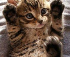 Que tout ceux qui sont dans la vibe…lèvent le doigt !