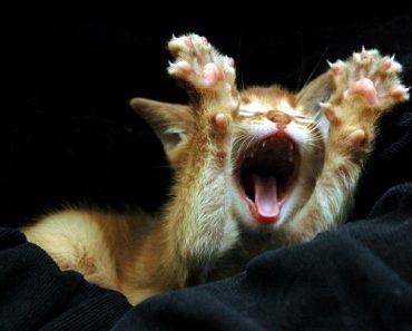 Quand tu hurles comme un fou, parce que t'as une voix de puceau !