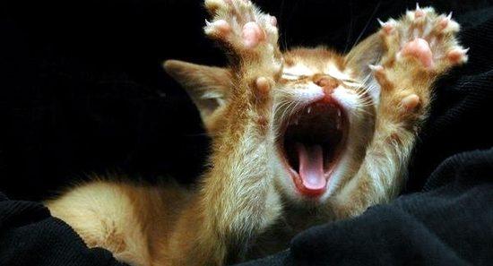 """Résultat de recherche d'images pour """"Des chats rigolos"""""""